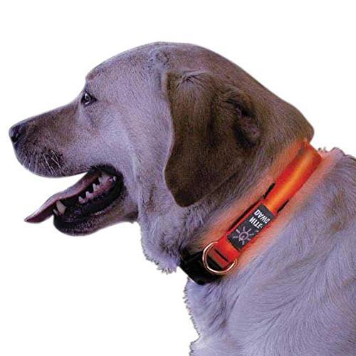 flexible strong nylon dog collar